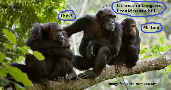 Trained chimps