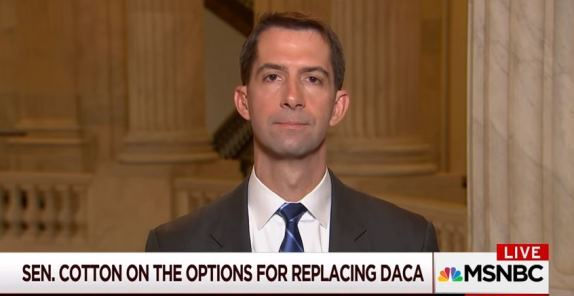 Tom Cotton DACA