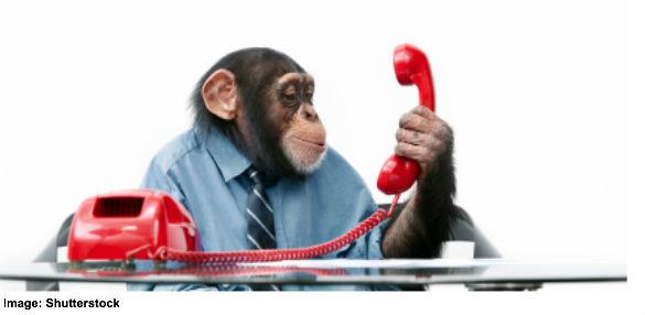 Chimp on the phone